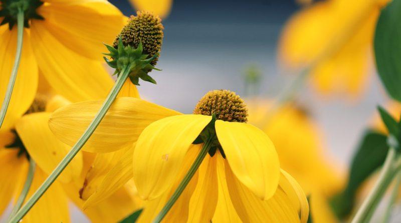 Kvety pre neskúsených. Vypestujte si svoju záhradku