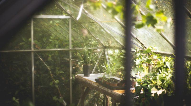 O aké rastliny sa nemusíte takmer vôbec starať a napriek tomu rastú?